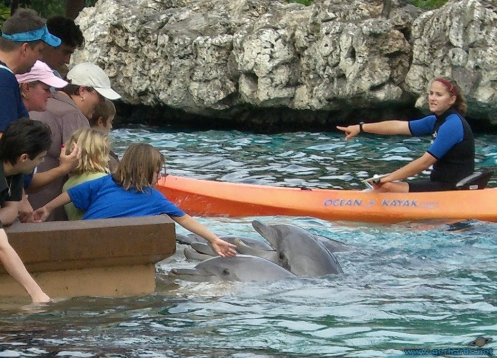 Touch a dolphin at SeaWorld Orlando!