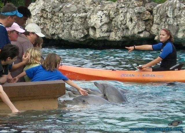 Delfinen kann man in SeaWorld richtig nahe kommen...