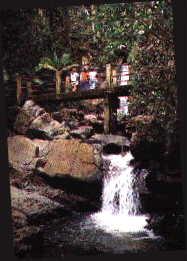 im Yunque-Nationalpark